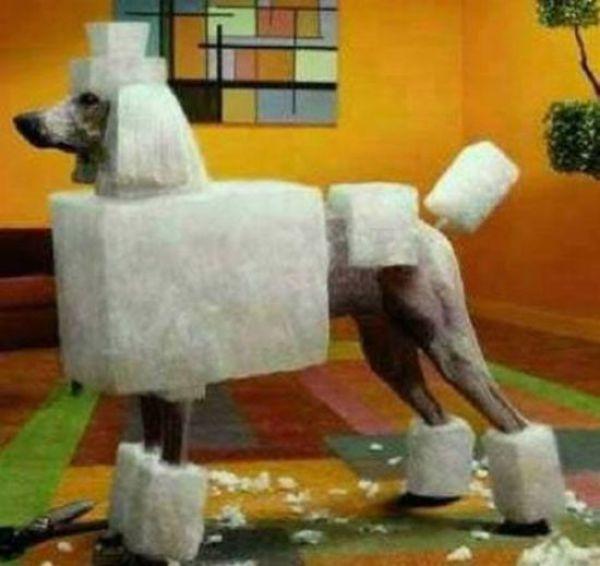Montage chien et détente CZ shadow Square-poodle